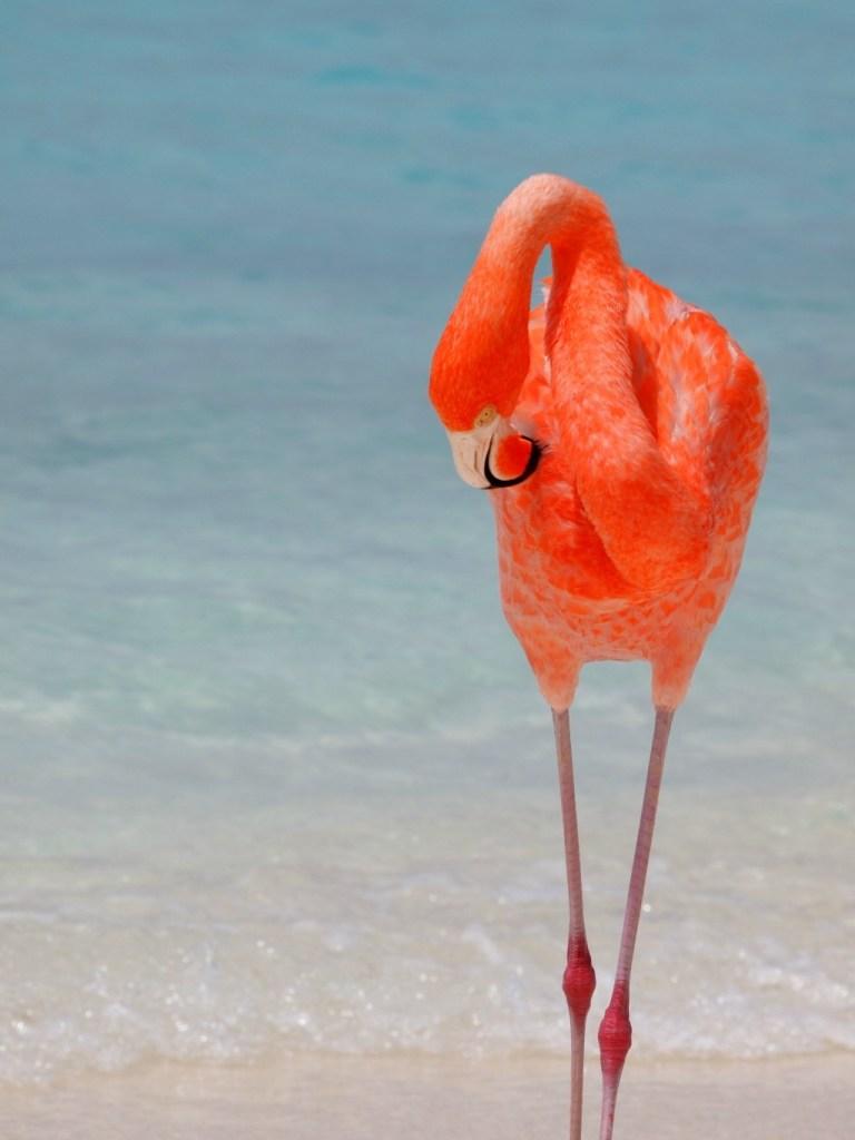 Mooiste stranden van Aruba Flamingo Beach