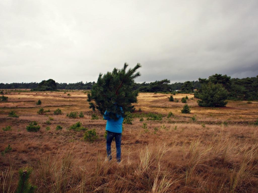 Flying Foodie met kerstboom op Veluwe