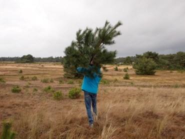 Kerstbomen Veluwe
