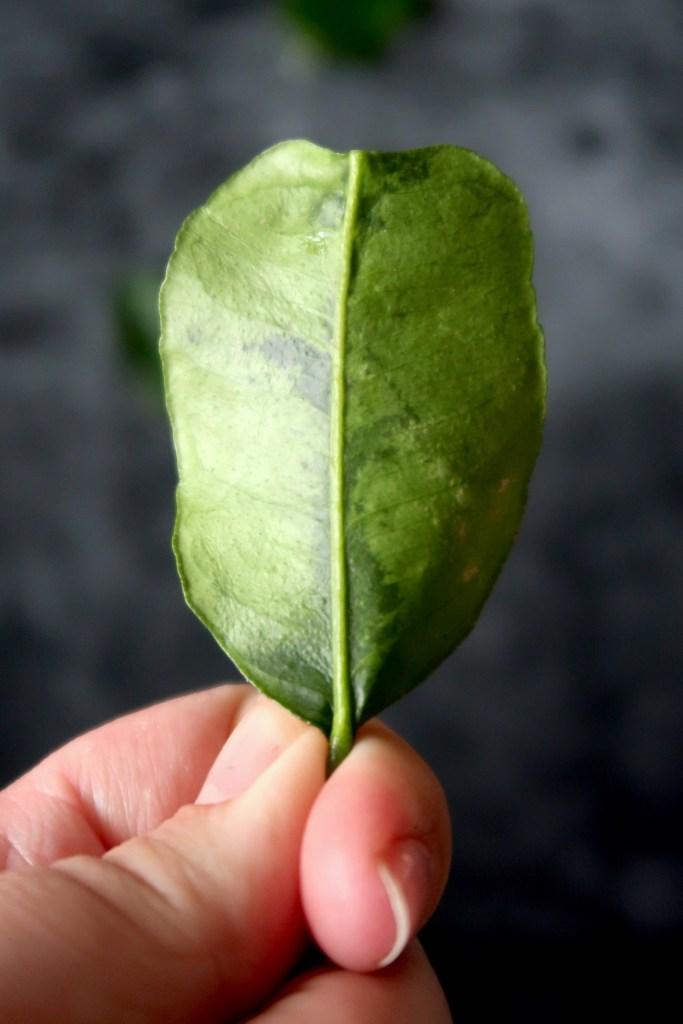 Limoenblad detail foto