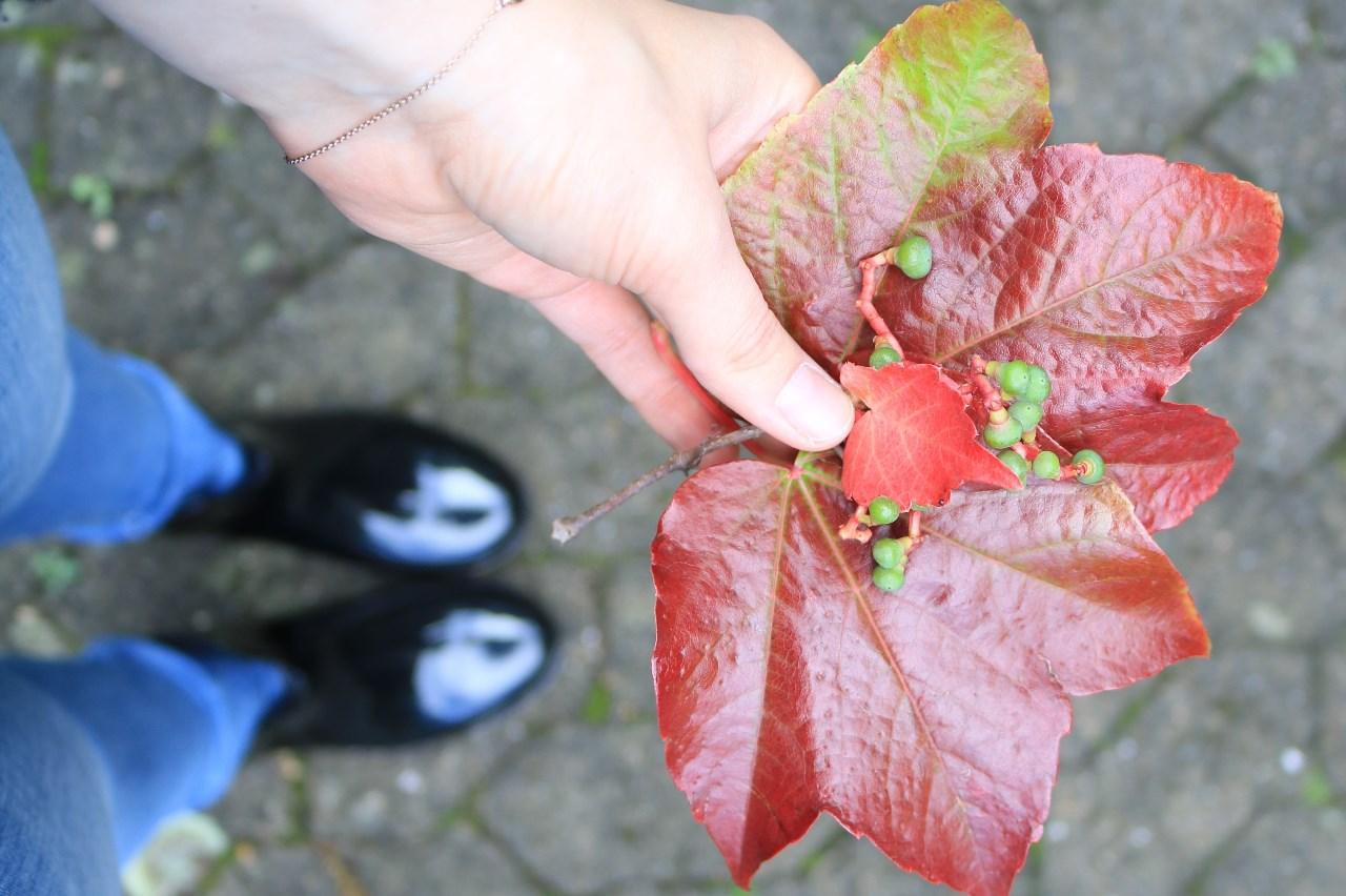 Dinge, auf die ich mich im Herbst freue