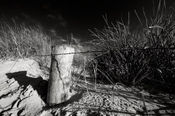 Holzpflock mit Dünengras in Schwarzweiß || Foto: © Ulf Cronenberg, Würzburg