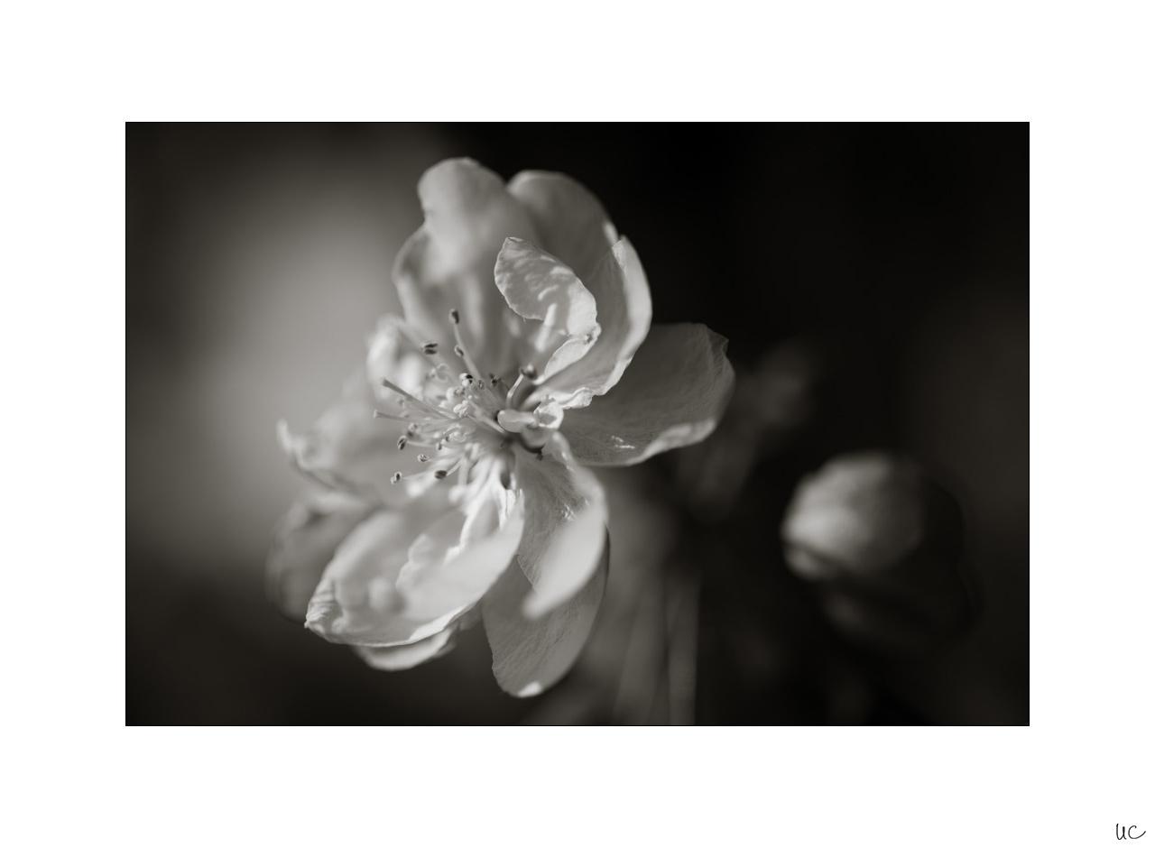 Frühlingsblüten No. 1| Foto: Ulf Cronenberg, Würzburg