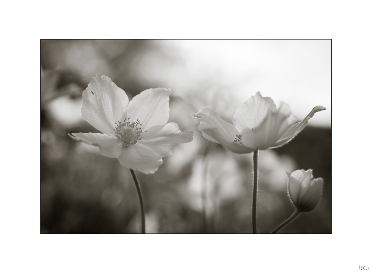 Frühlingsblüten No. 2| Foto: Ulf Cronenberg, Würzburg