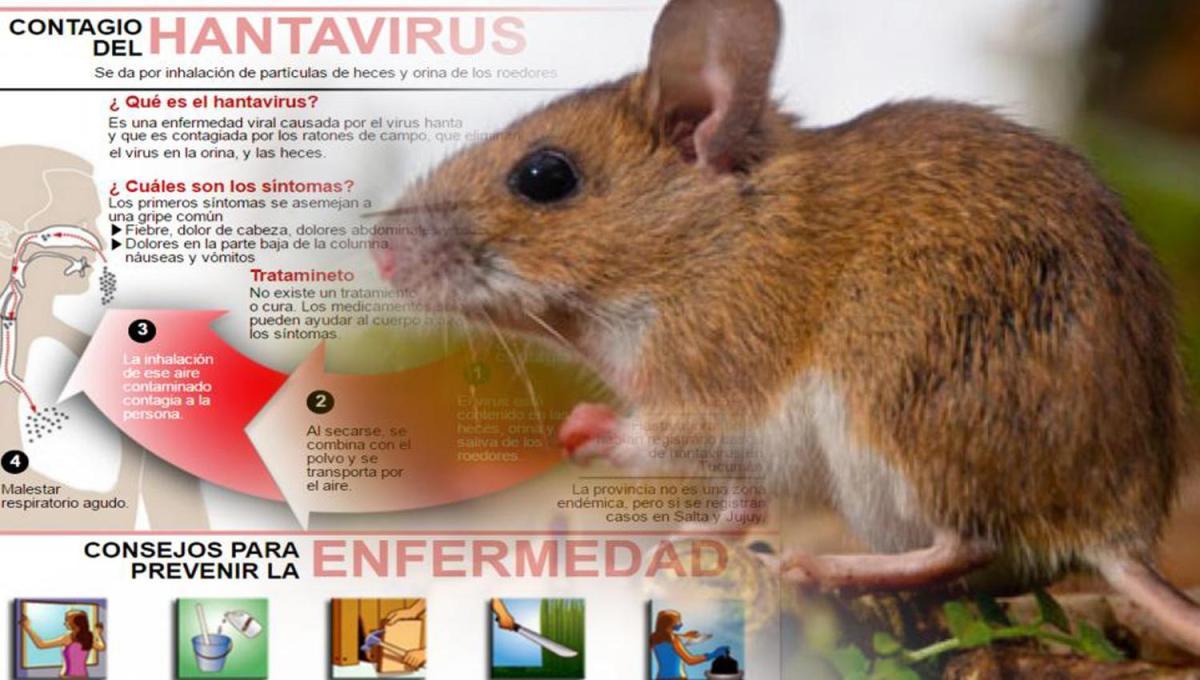 Hantavirus|Recomendaciones desde la Municipalidad de General Villegas a través de Dr Riat y el Ing Borone