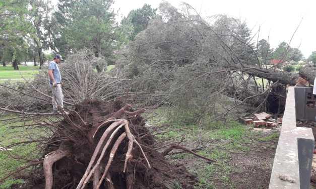 Carnerillo afectado por fuertes ráfagas de viento