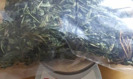 General Cabrera- Procedimiento- encuentran Cannabis