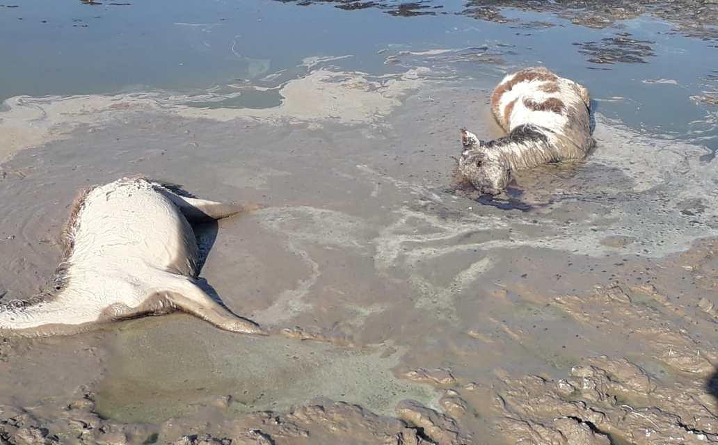 Laboulaye: Encontraron 4 equinos muertos y 30 equinos en mal estado de salud