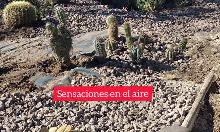 La Municipalidad arma un «Cactario» con especies donadas por Gloria Borra