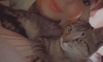 Bomberos al rescate de un gatito