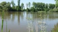 Jusqu'au 02 mai 2019, l'Agence de l'eau et le Comité de bassin Loire-Bretagne organise une consultation sur les grandes questions du futur SDAGE 2022-2027. Pour la dernière ligne droite, FNE […]