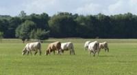 Mis en consultation du public depuis le juin et jusqu'au 26 juillet 2020, le projet de schéma régional Biomasse des Pays de la Loire a reçu notre avis. FNE Pays […]