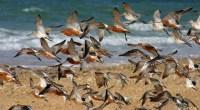 La liste rouge UICN permet de mesurer le risque de disparition d'une espèce sur un territoire donné. Sa réalisation constitue un préalable indispensable pour orienter les politiques de préservation de […]