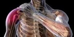 علاج اوتار الكتف بتسعة طرق مختلفة وفعالة