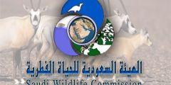 الهيئة السعودية للحياة الفطرية تاريخ نشاتها