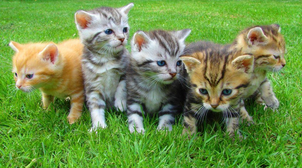 رؤية القطط في المنام للعزباء والمتزوجة بالتفصيل