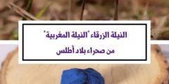 فوائد النيله المغربيه وطريقة استخدامها للوجه والجسم