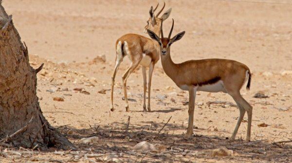 المحميات الطبيعية في الامارات