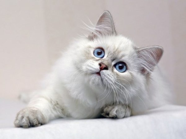 رؤية القطط في المنام والخوف منها