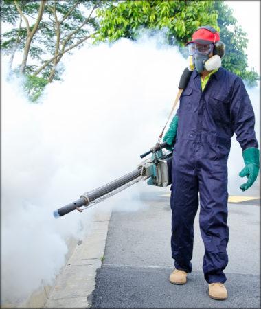 شركات مكافحة الحشرات في قطر