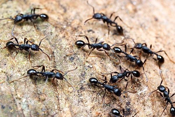 النمل والحسد والعلاقة بينهما ودلالات وجود النمل بالبيت
