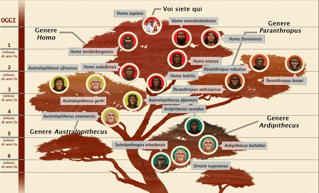 Image result for albero genealogico delle specie