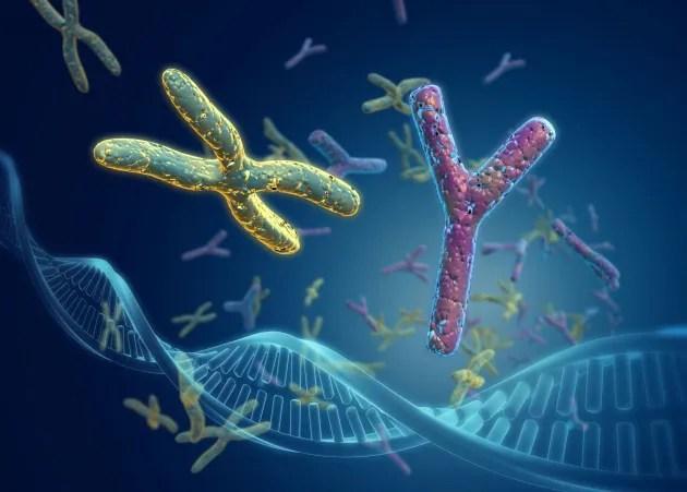 Risultati immagini per immagini cromosomi