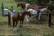 putten-polo-en-country-fair-2