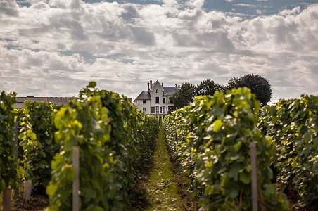 champagne-vines-house.jpg