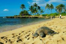 And Oahu Hawaii