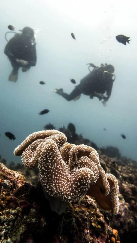duiken el nido-10