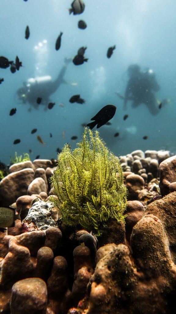duiken el nido-18