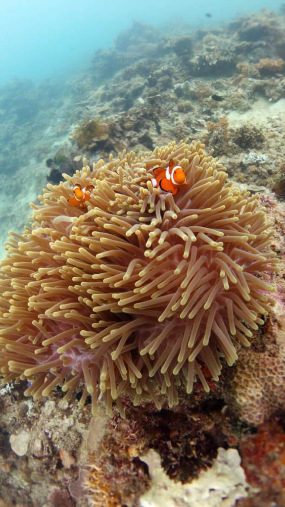 duiken el nido-2
