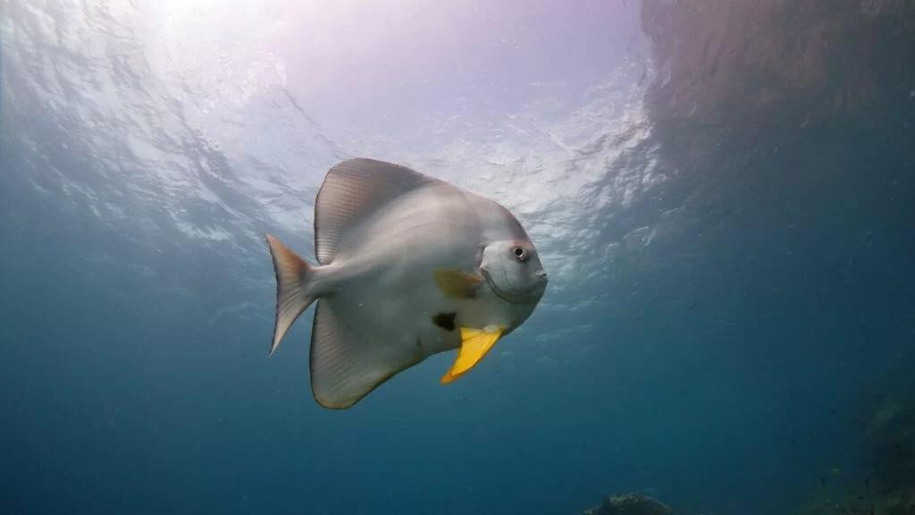 duiken el nido-3