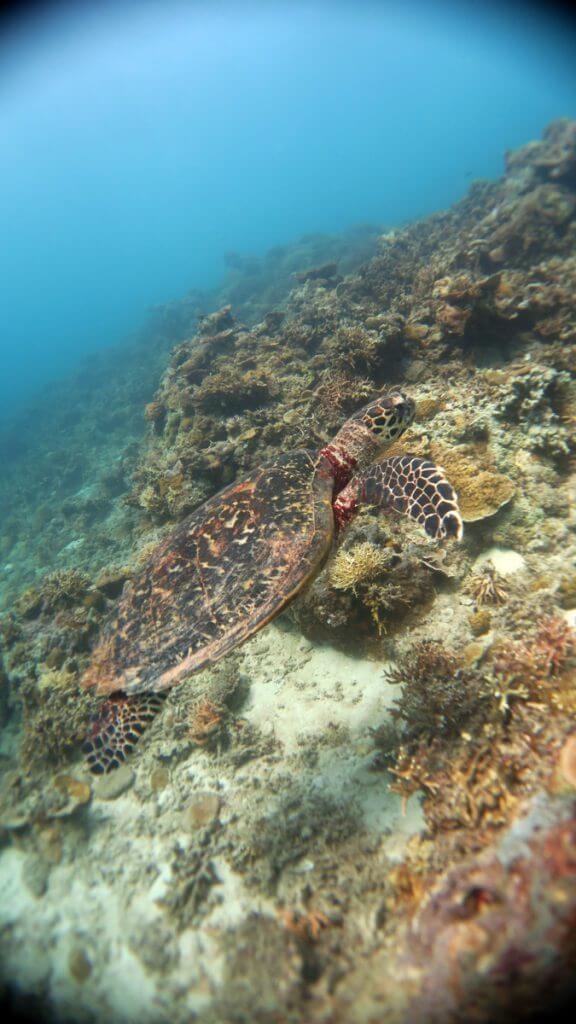 duiken el nido-5