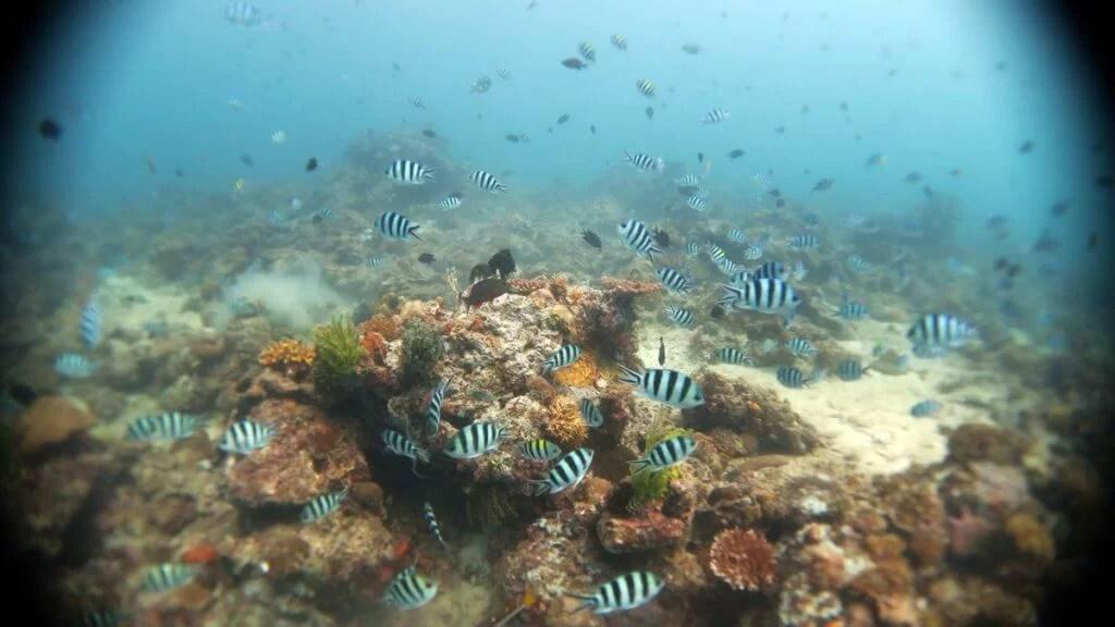 duiken el nido-6