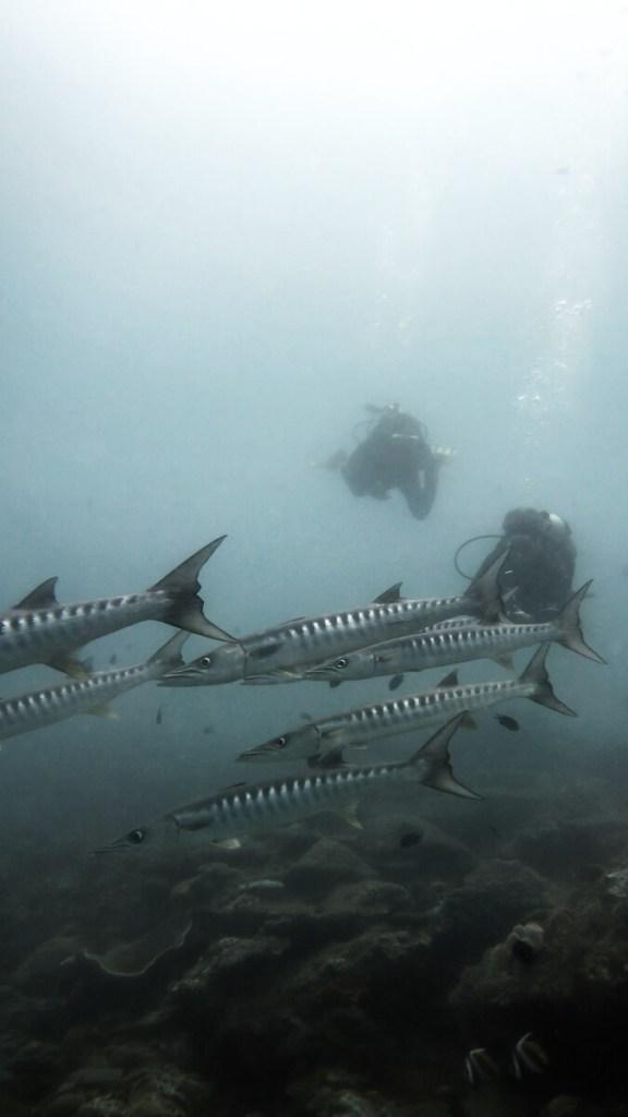 duikenfilipijnen-51