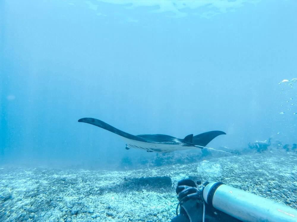 duiken komodo