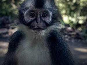 Bukit Lawang | Jungle Sumatra