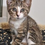 Adopting from Friends of Felines' Rescue Center