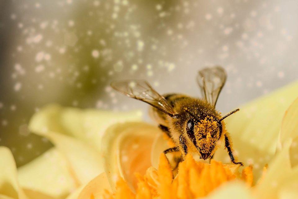 A virágpor: szupertáplálék, és ezt kevesen tudják.