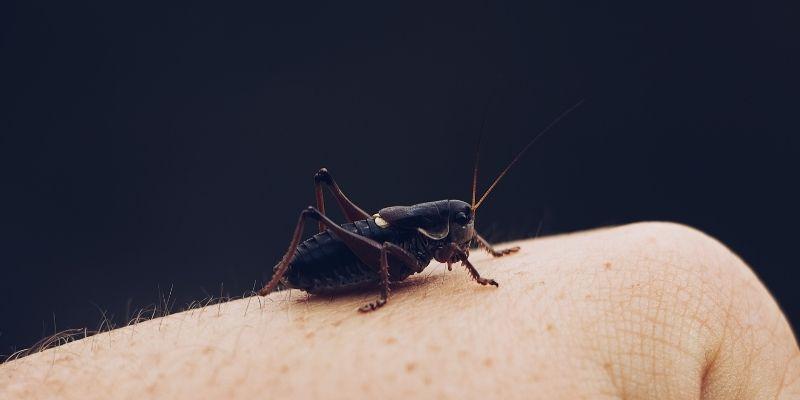 elin üzerinde böcek