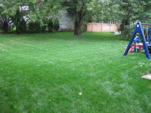 Drainage Project in Bryn Mawr-Back yard AFTER