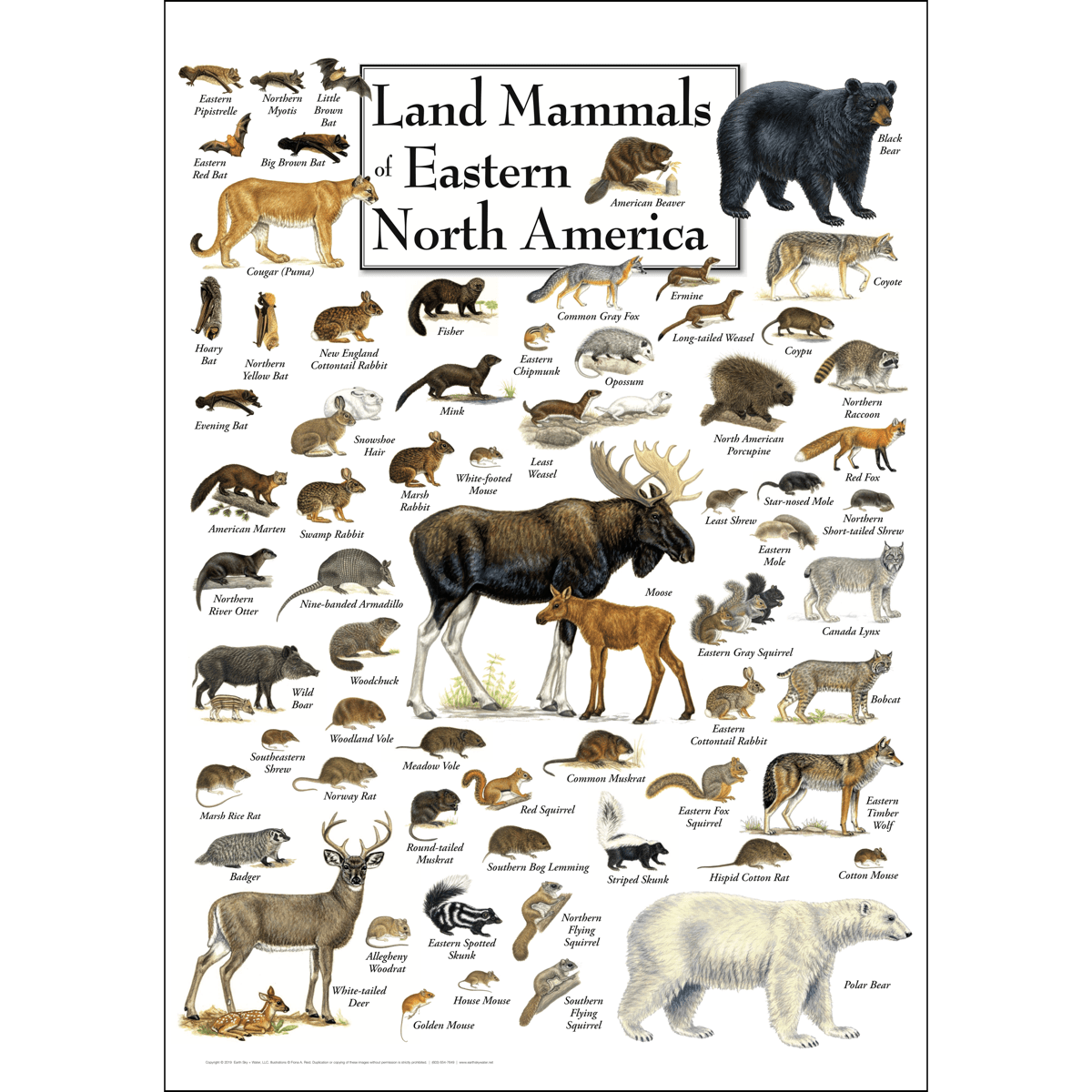 Land Mammals Of Eastern North America Poster Earth Sky