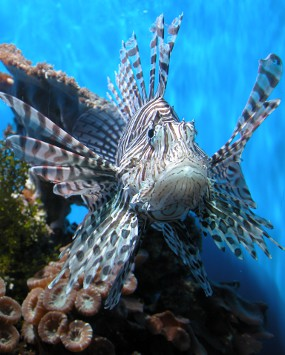 Best Choice for Hunting Lionfish
