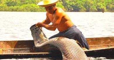 Pesca-do-pirarucu