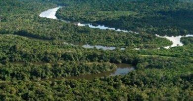 destaque-299164-amazonia