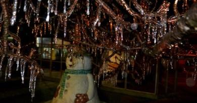 sao_joaquim_-_arvores_congeladas_noite_1_1