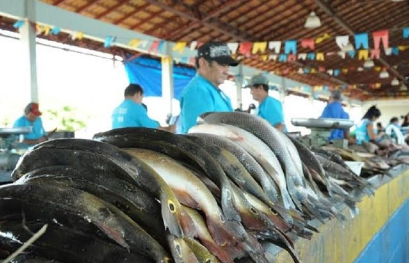 peixe-defeso
