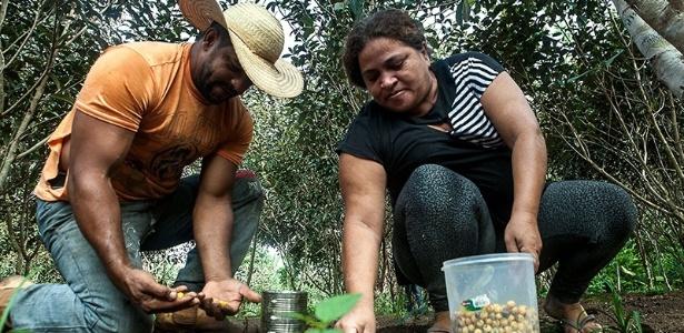 Os assentados Osvalinda e Daniel Pereira cultivam a roça dentro do assentamento; lote do casal é um dos mais preservados do local